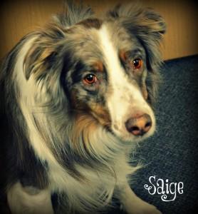 headshot Saige